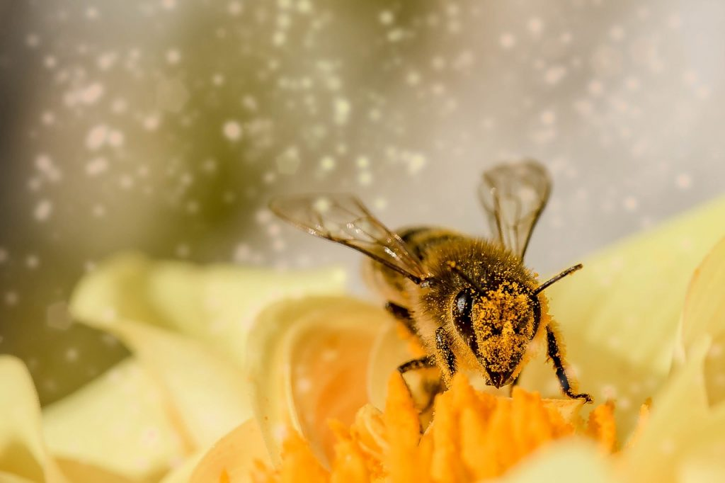 bee in pollen that causes eye allergies